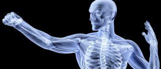 Health-Bones